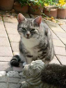 Kitty_bue01-225x300