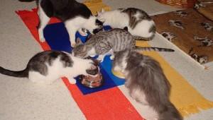 Katzenfuetterung3-300x225
