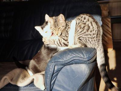 Buba und Odino