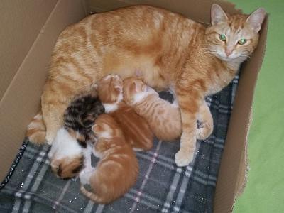 Ginger_und_Babies