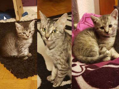 Mimi_mit_Kitten_HP